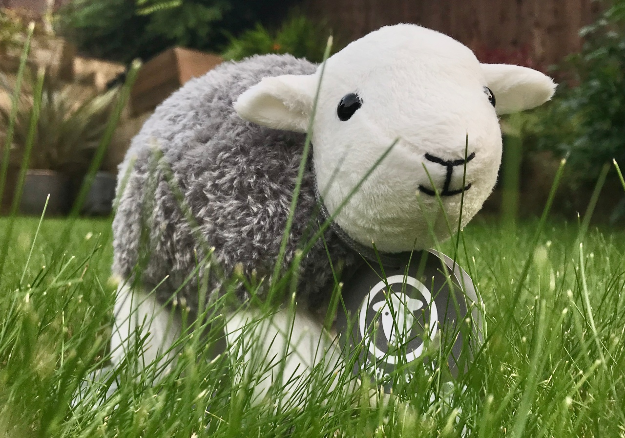 It's OK to be sheepish about the LakeDistrict