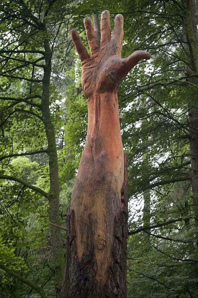 The real-life giant hidden in the Welshwoods