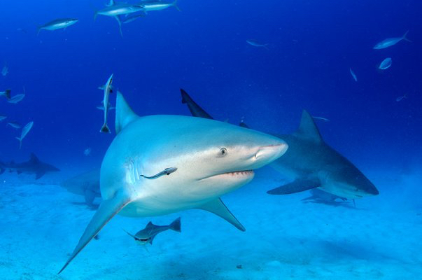 Infamous prison island guarded by sharks to welcome daytrippers